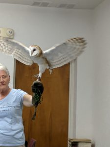 Stephanie holds the barn owl as it spreads it wings.