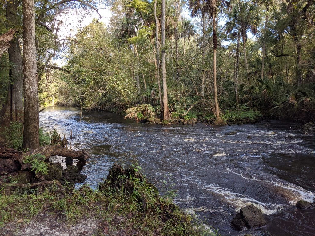 A view of the rapids on the Hillsborough River at Hillsborough River State Park.